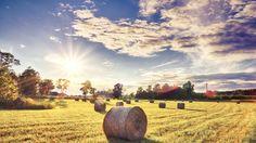 kalmar landsbygd - Sök på Google
