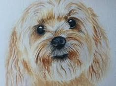 pencil drawing of cockapoos - Google Search