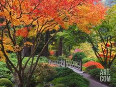 Fall colors at Portland Japanese Gardens, Portland Oregon Photographic Print by Craig Tuttle at Art.com