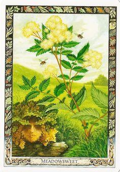 druid plant oracle cards | Druid plant oracle: meadowsweet