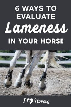 Lameness. Every horse owner fears the word. But when you own a horse, then you'll probably need to evaluate him for lameness at some point during his life. Here are 6 ways that you can evaluate lameness in your horse. | #horse #horsebackriding #horses #equestrian Horse Horse, Draft Horses, Andalusian Horse, Friesian Horse, Breyer Horses, Arabian Horses, Horse Care Tips, Barrel Racing Horses, Horse Show Clothes