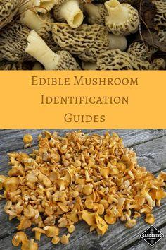 Is This Mushroom Edible? Edible Wild Mushrooms, Garden Mushrooms, Stuffed Mushrooms, Mushroom Guide, Mushroom Recipes, Chefs, Mushroom Identification, Growing Mushrooms At Home, Mushroom Varieties