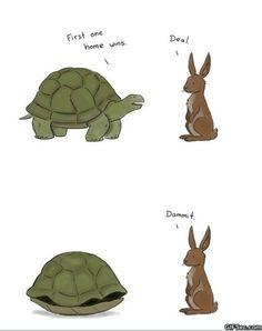 1b3511f35dfbfcdd72587b4ae8112b0d turtle meme funny turtle turtle memes sea turtle meme by zim402 turtle mania