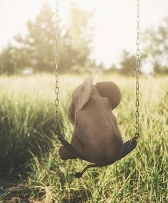 Let your imagination swing 😆 Cute baby elephant 🐘 Photo edited by via Photo Elephant, Cute Baby Elephant, Funny Elephant, Elephant Elephant, Baby Giraffes, African Elephant, Elephants Photos, Save The Elephants, Elephants Playing
