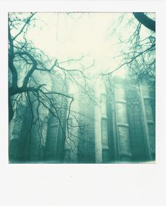 "filmisgod:  "" Follow me on TUMBLR  Polaroid 636: IP 600 film  Photographer: Benoit Bernard  """