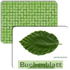 http://www.legasthenie-software.de/cgi-bin/wwwklex.prg ...