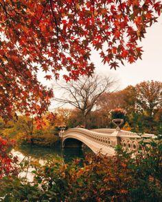 girlinthepark:Jeff Silberman | Central Park New York.