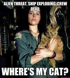 Ripley - ''Alien threat, ship exploding, crew dead, where's my cat?'' (530×589) source: Skeptical Kitten