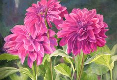 Three Magenta Dahlias Painting by Sharon Freeman - Three Magenta Dahlias Fine Art Prints and Posters for Sale