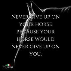 Never give up on your horse because your horse would never give up on you. #equestrian #quotes