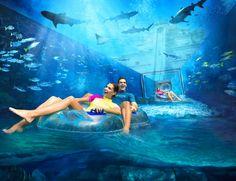 Atlantis The Palm, Dubai (ОАЭ/Дубай) Palms Hotel, Hotel Pool, Dubai Travel, Luxury Travel, Best Hotel Deals, Best Hotels, Voyage Dubai, Dubai Activities, Dubai Aquarium
