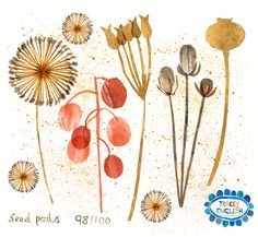 Seedpod by Tracey English www.tracey-english.co.uk Seed Pods, 100th Day, Seeds, Greeting Cards, Collage, Create, Illustration, Projects, Image