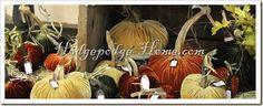 plush pumpkins for fall 2012