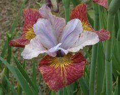 http://www.jpwflowers.com/cd08/images/HotSketch.jpg