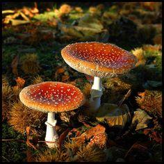 Mushrooms & Fungi ~