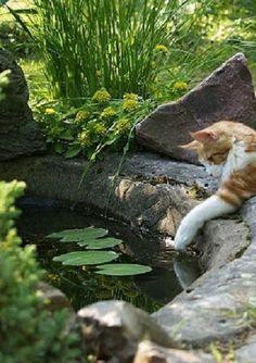 EPDM Liners for Pond leaks and Fish Pond Repair. Pond pro 2000 is a liquid EPDM and compatable to your EPDM pond liner sold in pond supply stores. Crazy Cat Lady, Crazy Cats, Big Cats, Cool Cats, Cats And Kittens, Gato Grande, Video Chat, Photo Chat, Lily Pond
