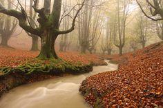 Bosque encantado de Otzarreta (País Vasco)