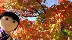 技能五輪全国大会の山形県の和裁会場前は紅葉🍁が見頃です🍁 #東亜和裁紅葉まつり2016 #紅葉 #華ちゃん #ぬい撮り#friday_flower_plushfes #技能五輪全国大会 #山辺町総合体育館 #東亜和裁 #toawasai