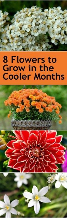 8 Flowers to Grow in the Cooler Months | Bless My Weeds
