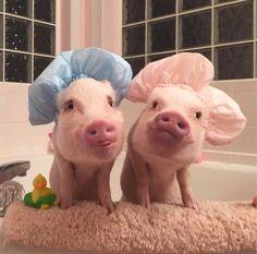 SCRUB A DUB DUB TWO PIGGIEES IN THE TUB !!