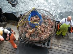 """What's the best tour you've ever taken? Read about VT Member Bunsch's awesome tour of the Alaskan waters along a former """"Deadliest Catch"""" ship: http://members.virtualtourist.com/m/p/m/2321fd/"""