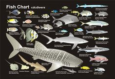Fish Chart. My boys like to fish