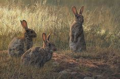 Rabbits prints - Canvas print of rabbits. From an oil painting of three young rabbits by Martin Ridley