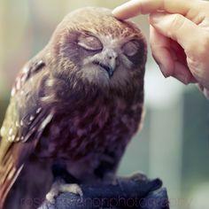 owlove by Julietsound.deviantart.com