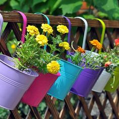 Spalierobst anbauen – herrliche Idee für den kleinen Garten ...