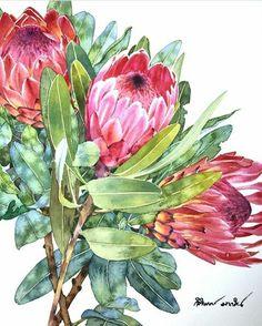 Protea Watercolor Print Watercolor Protea Painting Home Decor Floral Illustration Protea Art Protea Plant Wall Art Protea Giclee Art Print Protea Art, Art Watercolor, Watercolor Flowers, Art And Illustration, Illustrations, Art Floral, Flower Art Drawing, Drawing Art, Australian Art