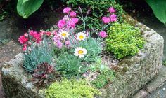 Designs For Garden Flower Beds A Hypertufa Trough Looks Like An Antique Stone Sink At A Fraction Of The Price Seaside Garden, Alpine Garden, Alpine Plants, Rockery Garden, Garden Planters, Garden Troughs, Back Gardens, Small Gardens, Container Plants