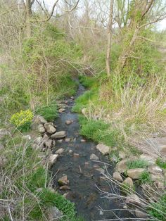 A slow, babbling brook, #stream