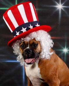 Boxer Vote 2012