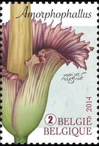 Amorphophallus Titanum Titan Arum Sellos Postales Estampilla Postal Estampillas