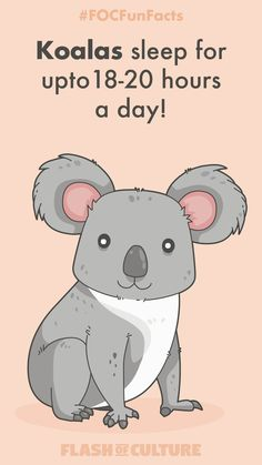 Beautifully designed and educational Australian flashcards that help children learn about culture the fun way. Explore and enjoy Australian culture. Animal Facts For Kids, Fun Facts For Kids, Fun Facts About Animals, Wtf Fun Facts, Australia Fun Facts, Australia For Kids, Australia Animals, Koala Craft, Animals Beautiful