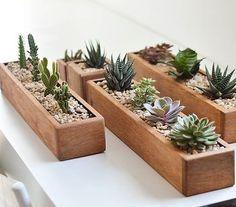 Y... Para decorar la mesa del quincho? Sii quedan divinas! Encargá las tuyas!! Suculenta y Cactus de colección Souvenirs para fiestas,…