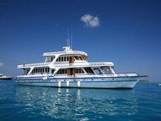 Plonger aux Maldives / Croisière bio / Novembre 2014 #plongée #biodiversité #maldives