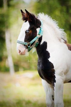 Любовь Лошадей, Красивые Лошади, Маленькие Жеребята, Тяжеловозы, Цыганская Лошадь, Клейдесдаль, Лошади