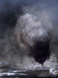 Buffalo Digital Art - Buffalo Charging Through Snow by Daniel Eskridge Beautiful Creatures, Animals Beautiful, Buffalo Animal, Buffalo Art, Train Tattoo, Snow Artist, Buffalo Painting, Snow Showers, Selling Art Online