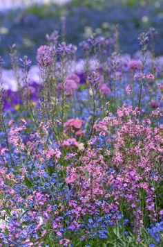 Underbara färger till min trädgård - hitta här: http://lunasblogg.net/