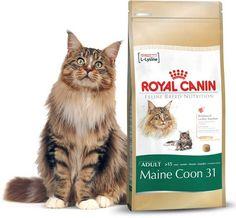 Royal Canin Maine Coon dla dorosłych kotów