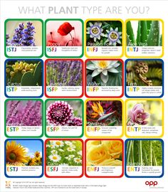 Just for fun. Myers Briggs as plants. Enfp Personality, Personality Psychology, Myers Briggs Personality Types, Infj Mbti, Istj, Introvert, Mbti Charts, 16 Personalities, Types Of Plants