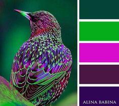#alinababina #alinababinacolors