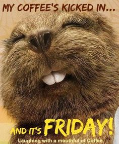 My coffee's kicked in and it's Friday!                                                                                                                                                                                 More