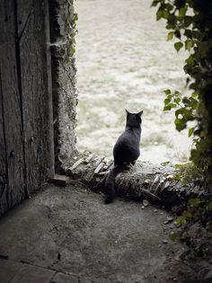 Cat from Saint-Georges-sur-Loire, France