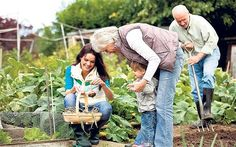 Pros and cons of growing your own fruits and vegetables!