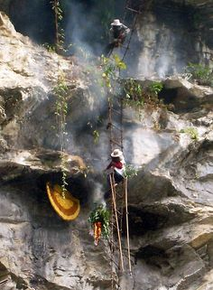 The High Cliff Adventure of Honey Hunting in Nepal