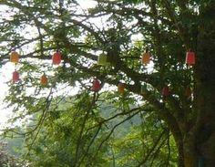 installations de guirlandes lumineuses entre des arbres