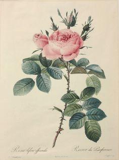 ボタニカルアート展 Vintage Paper, Botanical Prints, Flower Art, Nostalgia, Illustrations, Artists, Wall Art, Rose, Drawings