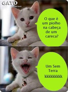 Top 26 memes engraçados hilariantes – Hilarious Jokes and Funniest Quotes Memes Humor, Cat Memes, Gato Do Face, Funny Photos, Funny Images, Funny Cats, Funny Jokes, Funny Animals, Good Humor